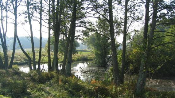 Eskemose skov
