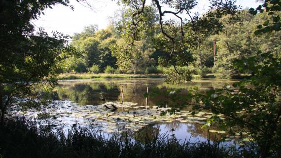 Frederikslund skov