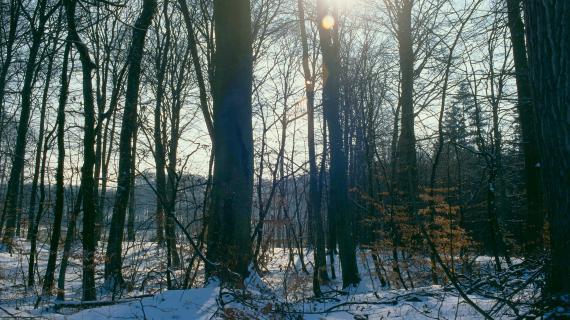 Vinterskov