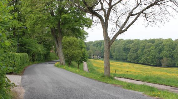 Træer Attemosevej-1