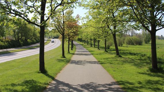 Træer Birkerød Parkvej