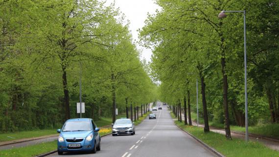 Træer Skodsborgvej