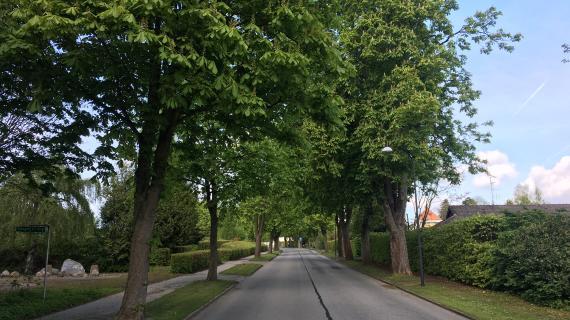 Træer Søllerødvej