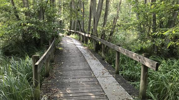 Bro og sti i ellesump vest for Pilegårdsparken, område A3