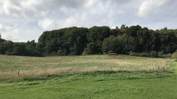 Grennesminde græsfolde og skov, område A1