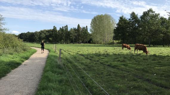Kreaturfold i Pilegårdsparken, område A5
