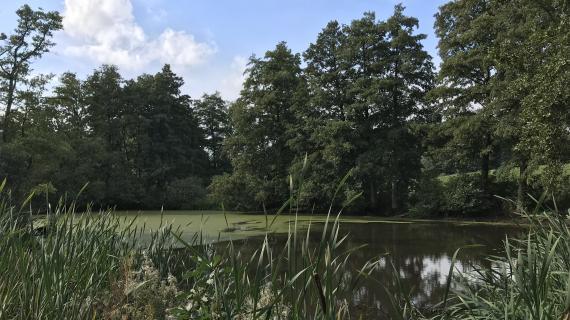 Sø i ellesump v. Pilegårdsparken, område A1