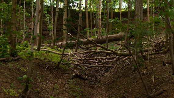 Foto af sommerskov - dekorativt foto for CO2-binding i skoven.