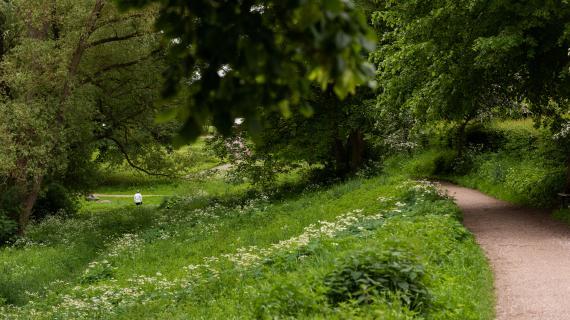 Sti i Langedam Bypark med frodigt grønt omkring sig. fokus er naturpleje i Langedam Bypark