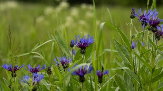 Close-up af blomster i Langedam