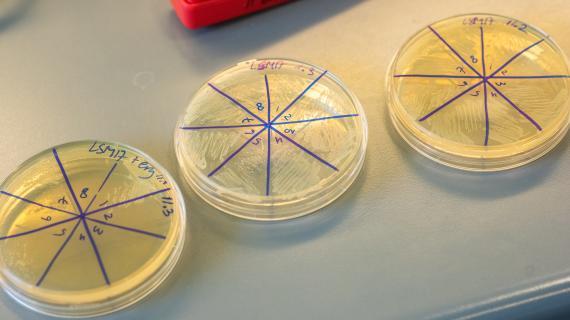Med udgangspunkt i en samling af næsten 40.000 bakteriestammer forsker og producerer koncernen i bakteriekulturer og enzymer til mejeriprodukter, og udvikler og sælger naturlige ingredienser til den brede fødevareindustri, landbruget og medicinalbranchen.