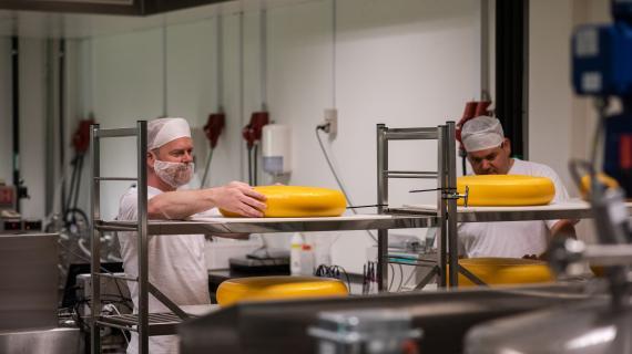 Oste produceret på test-stammer.