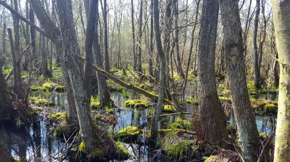 Skov i vand