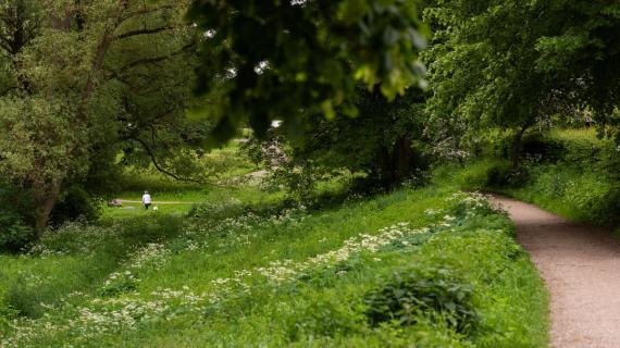 Langedam i Birkerød er en park med stor naturværdi tæt på Birkerød centrum