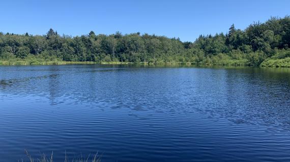 Sø i Bøllemosen