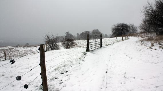 Vinter ved Sjælsø januar 2021