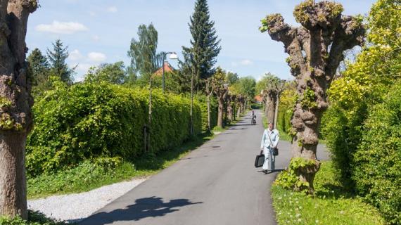 Lindevangsvej i Birkerød, ved Birkerød Sø