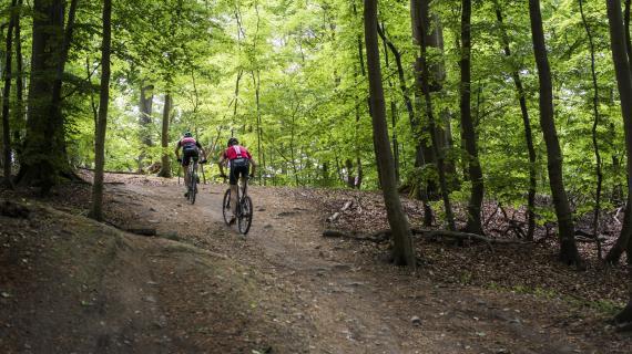 På cykel i skoven