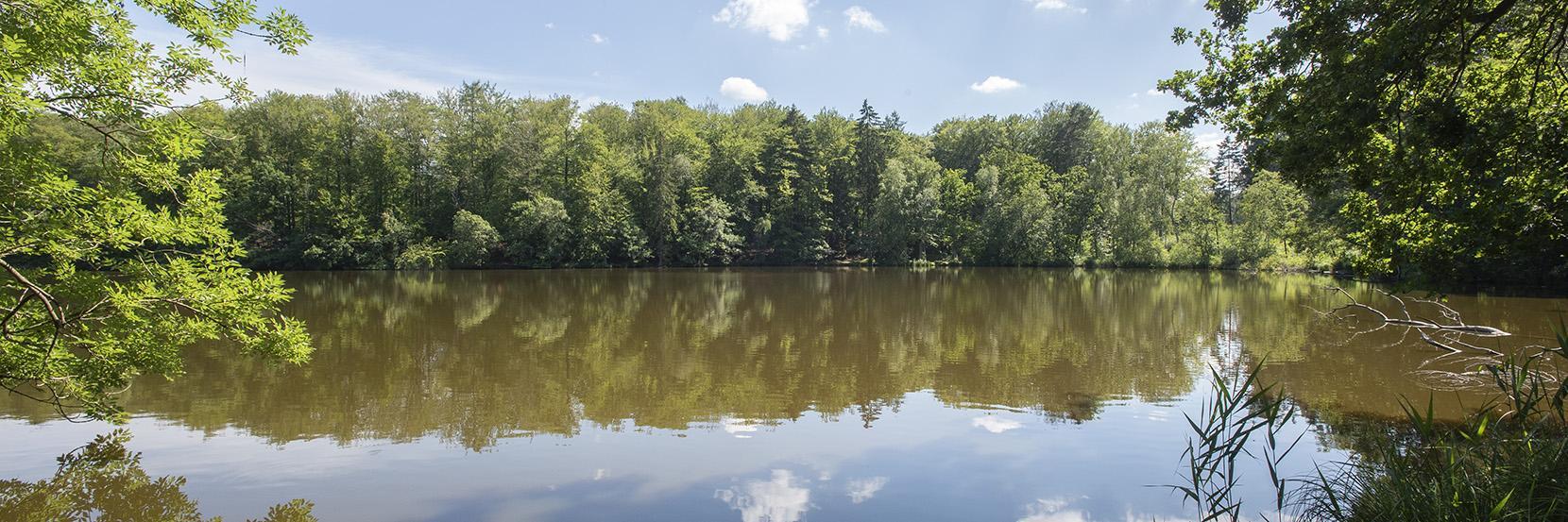 Skovsø i Rude Skov