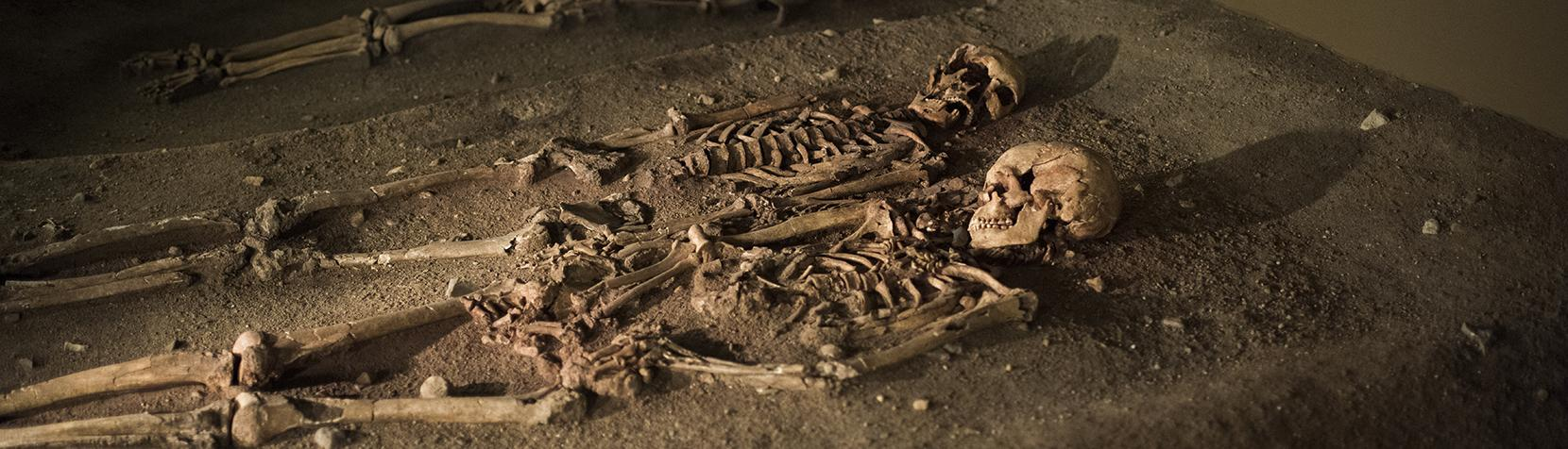 Skeletter