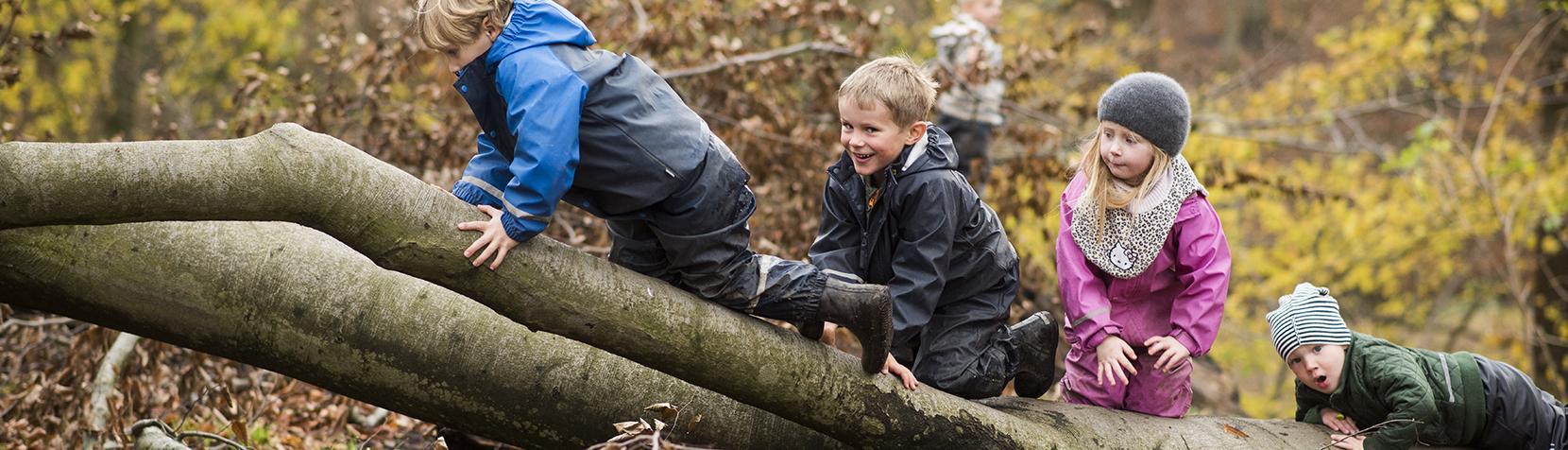 Børn kravler på væltet træ