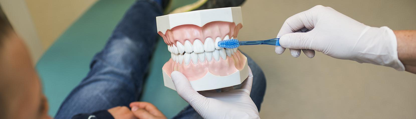 Tandlæge viser hvordan tænderne skal børstes