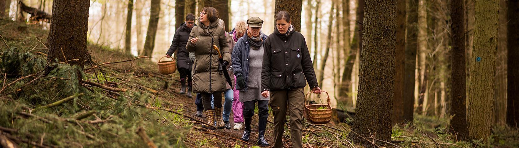 Deltagere på rygestop i naturen finder spiselige planter i skoven