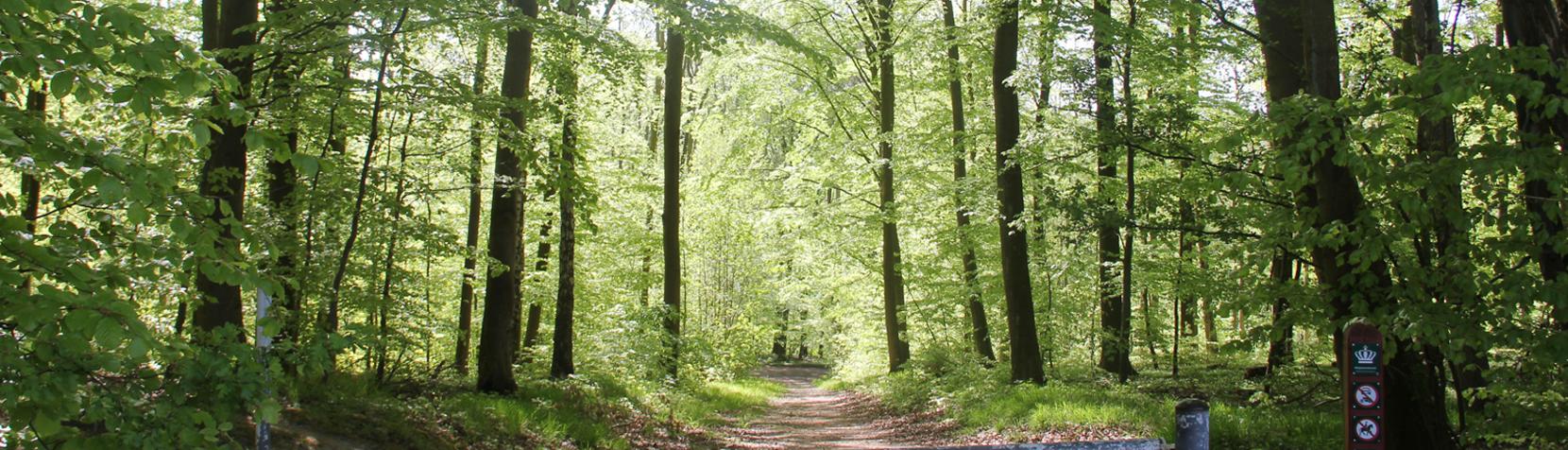 Skov der er sprunget ud
