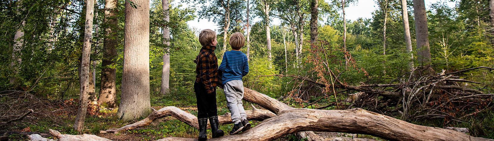 To drenge fra Børnehuset Tudsen i skoven