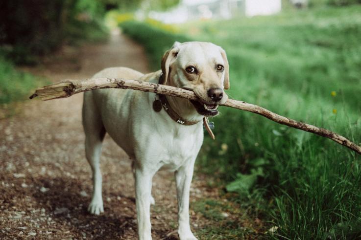 Hundetur