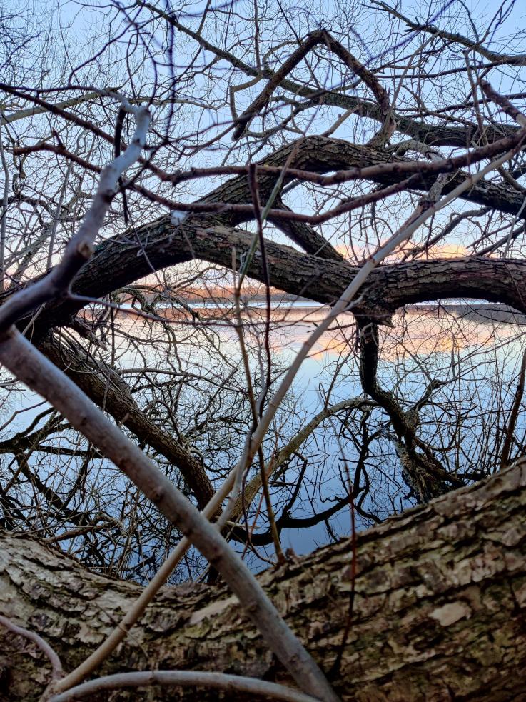 Grene med sø og solnedgang i baggrunden