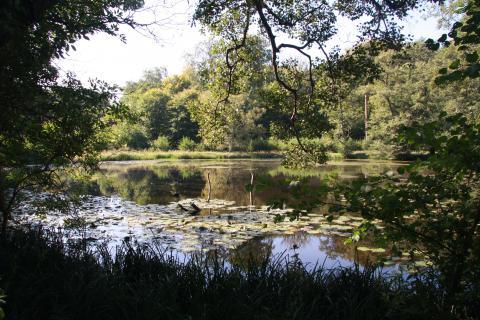Frederikslund skov -udsigt over søen en sommerdag