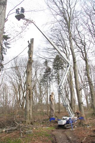 Beskæring af træruin med kran i vinterhalvåret