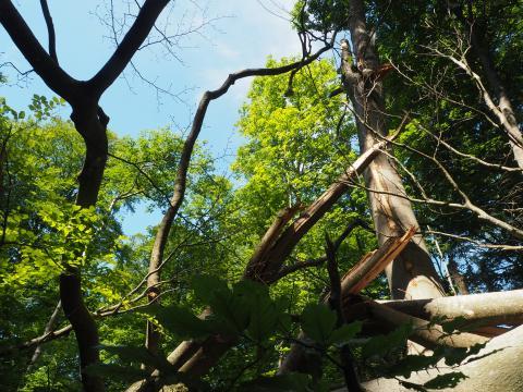Fældede stammer og grene ligger ind over hinanden og skaber lysåbning