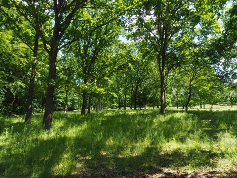 Skovgræsset område, Eskemose Skov