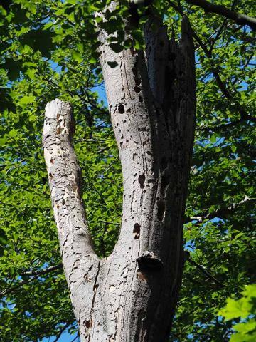 træruin med insekt og fuglehuller