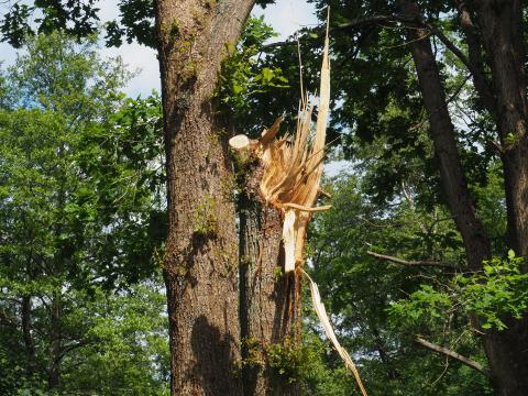 Skadet træ