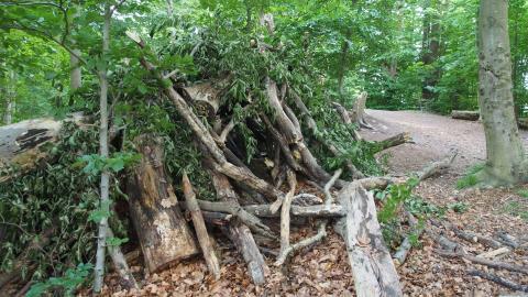 Hule af grene og stammer på Mariehøj