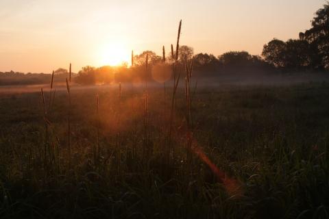 Solnedgang over sumpskoven i Maglemosen med let tåge og græssen rævehale i forgrunden